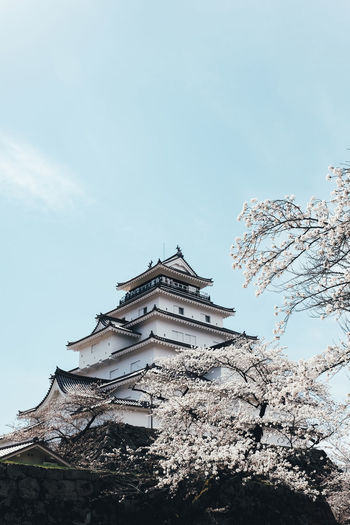 Sakura Building Exterior Sky Architecture Built Structure Low Angle View Tree Nature Building Place Of Worship Belief Cloud - Sky Religion No People Day Spirituality Plant Outdoors The Past High Section Sakura Sakura Blossom Sakura Trees