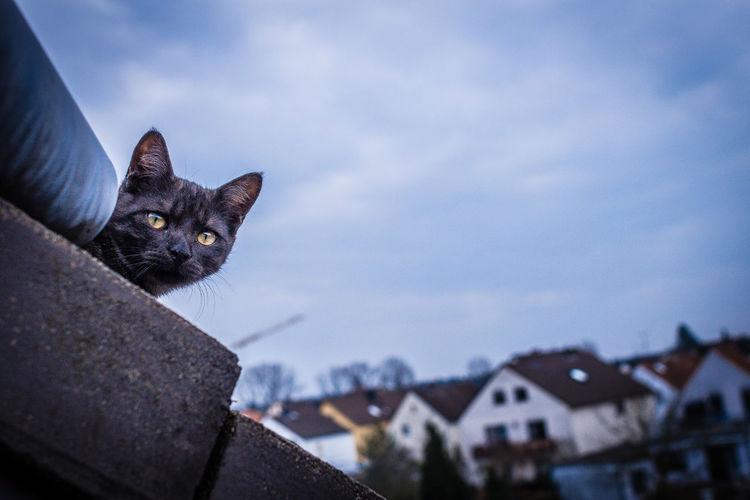 Portrait Of Cat On Roof Against Sky