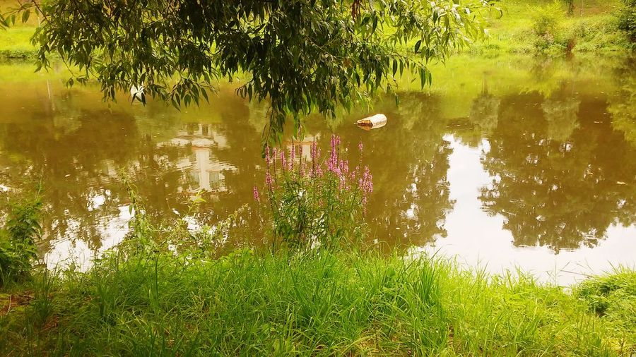 Reflection Water Lake Outdoors Nature Standing Water Tree Plant Day Growth No People Animal Wildlife Animals In The Wild Animal Themes Beauty In Nature Puddle Flood Bird