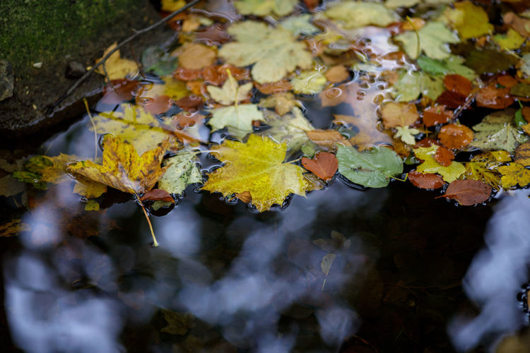 Tadaa Community Autumn Beauty In Nature Change Close-up Day Floating Leaves Floating On Water Fragility Germany Harz Leaf Maple Maple Leaf Nature No People Outdoors Selective Focus Water