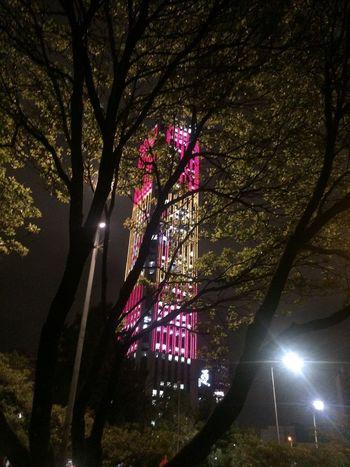 Tree Illuminated Night Plant Lighting Equipment Low Angle View No People