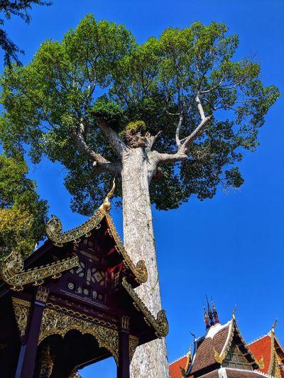 Wats in Chiang