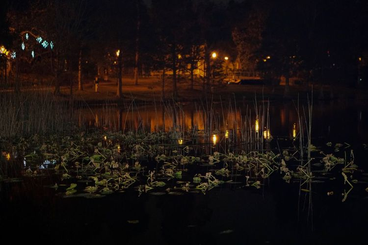Nature Flower Night Lake Water Lily Tranquility No People Outdoors Lotus Water Lily Leaf Reflection
