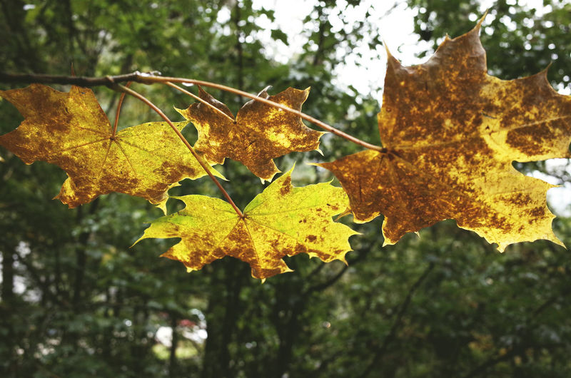 autumn 2016 Autumn Autumn Autumn Colors Autumn Leaves Beauty In Nature Branch Change Close-up Green Growth Leaf Leaf Vein Leaves Natural Condition Nature Outdoors Scenics Season  Tree Yellow Color