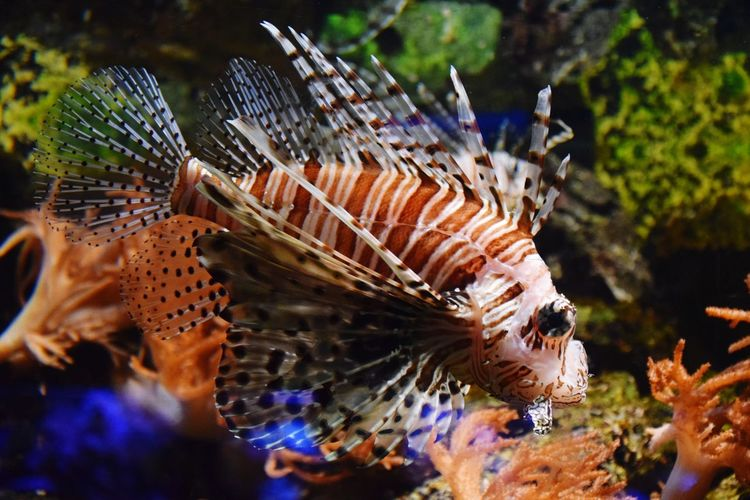EyeEm Selects UnderSea Sea Life Water Underwater Sea Horse Sea Close-up