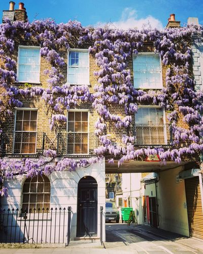 Architecture Built Structure Building Exterior Day Outdoors No People Sky House Travel Architecture London Springtime City Old House Old-fashioned Wisteria In Full Bloom Wisteria Inspirational