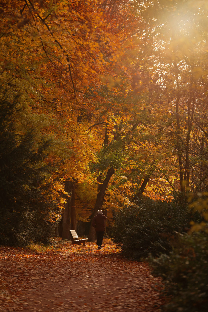 Rear View Of Man Walking By Autumn Trees On Field