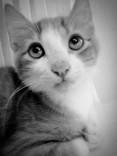 Cat Photography Cat Eyes Cat Content