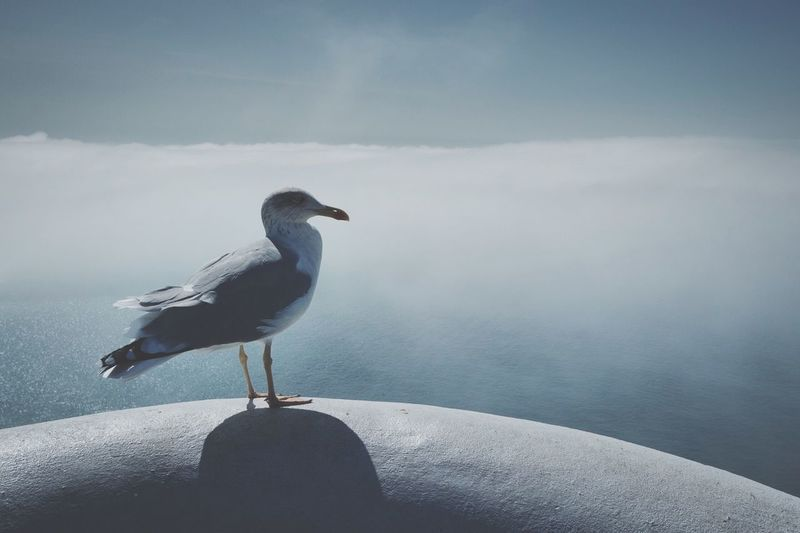 Seagull perching on retaining wall by sea against sky