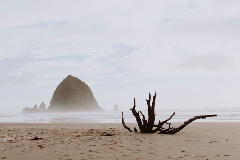 Driftwood tree in front of famous haystack rock formation in Cannon Beach on the Oregon coast Fog Misty Morning Oregon Coast Oregon EyeEm Selects Sea Water Beach Sky Land Sand Beauty In Nature Scenics - Nature Nature Tranquil Scene Tranquility Rock Cloud - Sky Day Rock Formation Rock - Object Non-urban Scene Idyllic No People