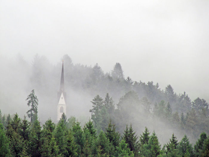 High angle view of trees in foggy weather