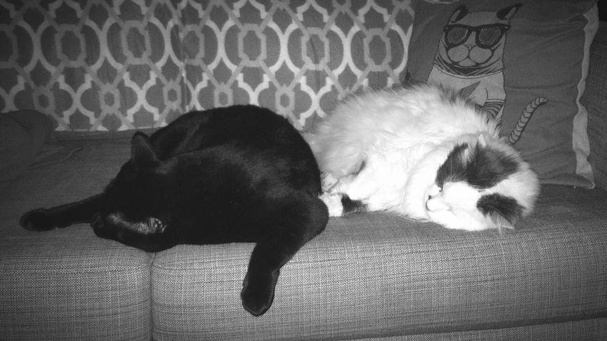 Morning snuggles Cats Cat BLackCat Black Cats Black Cat Fluffy Cat Love Home Animals Feline Friends Mates Fluffy Cuddles Cuddling