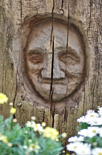 Close-up of sculpture on tree trunk
