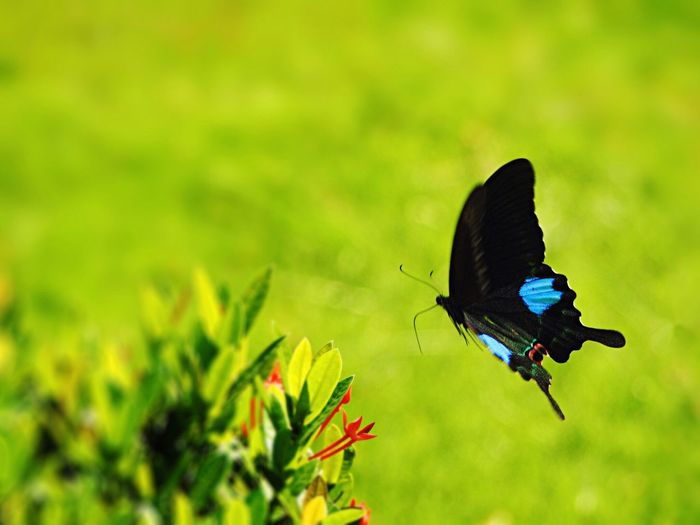 Close-up of butterfly flying by plants