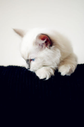 White kitten looking down at home