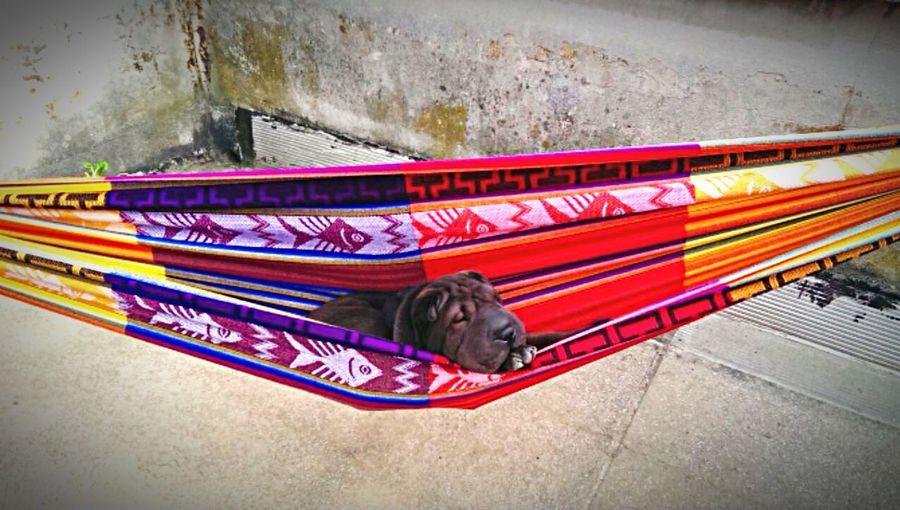 Life Jah-Pan Eazy Dog Love Sun