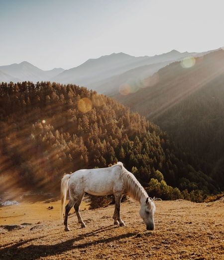 Horse Grazing On Mountain Against Forest During Sunset