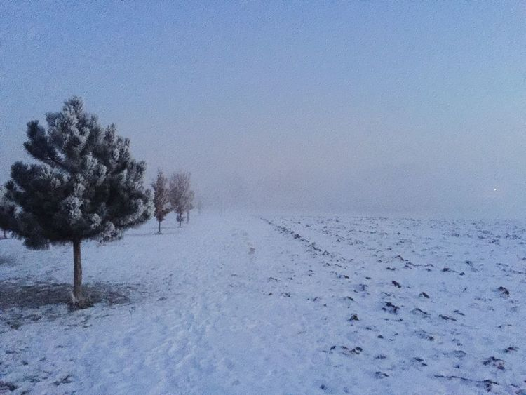 Cold Temperature Snow Winter Weather Nature Frozen Beauty In Nature Tranquility Landscape Outdoors Tranquil Scene Scenics No People Day Tree Field Bare Tree Clear Sky Snowing Sky