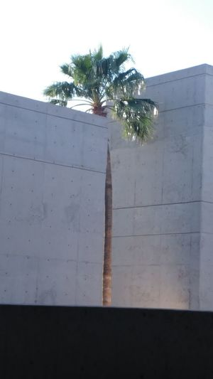 Anomaly Tree Palm Tree Day No People Outdoors Sky Concrete Structure Building Exterior Outside Pima Community College Building Concrete Jungle Modern Architecture Tucson Lg G5 Ryrygreen Ryan GREEN Concrete Modern Camera Tricks Tricky Pic