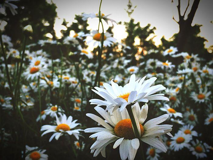 Flowers By Lemonni