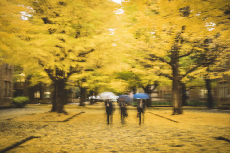 An abstract like blurred motion of 3 employees walking through a walkway cover with fallen yellow Ginkgo leaves in the University of Tokyo compound Abstract ASIA Autumn Autumn Colors Autumn Leaves Blurred Motion Evening Fall Fallen Fallen Leaves Ginkgo Golden Japan Motion Motion Blur Tokyo Tree Trees Umbrella University Walking Walkway Working Class Yellow Yellow Leaves