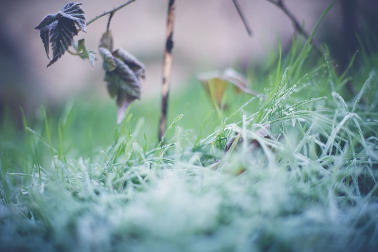 Backyard Cold Cold Weather Frost Frosty Grass Frosty Grass Blades Frosty Morning Frosty Mornings Grass Nature Nature Photography Nature_collection Best Of EyeEm Best Of Eyeem Shot Best EyeEm Shot Best EyeEm Nature Best Eyeem Pics Best Eyeem Shots