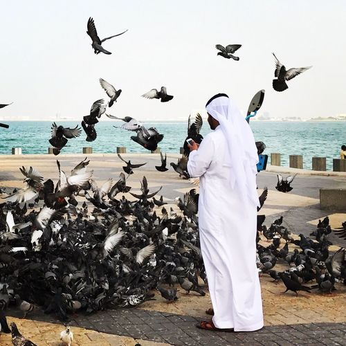 Large Group Of Animals Bird Flying Flock Of Birds Seagull Full Length Sea Animals In The Wild Animal Wildlife Men Beach Sand One Person Sky One Man Only Nature Spread Wings Day Outdoors Water