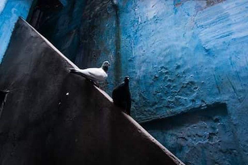 Dhakagram Dhakatales Color Blue Colorful Photography Photographyislife Photooftheday Picoftheday Everydayeverywhere Everydaybangladesh Photographersofbangladesh Pob_color Documentary Photography Oldtown Birds Instagram Instapic Fujifilm Fujifilm_xseries