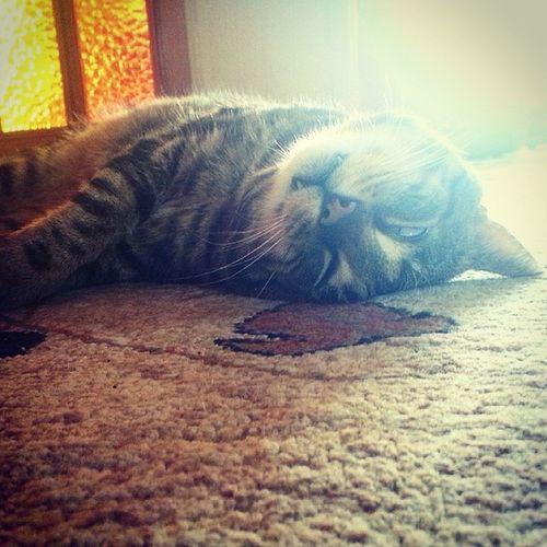 Czo ten Tosiek ? ??? Cat Vampire Evolution  Boiling_hot melting fixed kiteły homesweethome smile