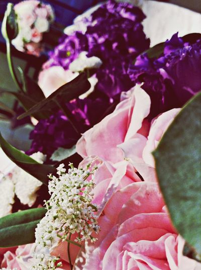 最美的主角不是炫彩奪目的大花朵,而是在旁努力成為美麗風景的小花