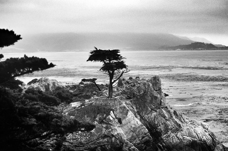 Pebble Beach Tree, California Black And White Photography Black & White Black And White Collection  Light And Shadow Pebble Beach Scenic Lookout Scenics EyeEm Best Shots - Landscape Scenic View Beach Photography California California Coast EyeEm Best Shots - Nature Black&white Blackandwhite America Black And WhiteBlack And White Collection  Blackandwhite Photography Rocks Ocean Scenic Landscapes Scenic Ocean View EyeEm Best Shots - Black + White