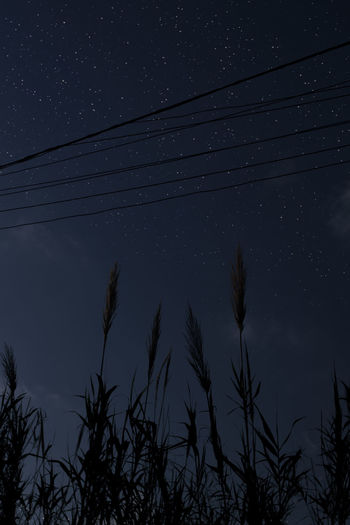 Sky Star - Space Low Angle View Plant Astronomy Night Cable Beauty In Nature Space No People Nature Tree Tranquility Scenics - Nature Silhouette Growth Power Line  Electricity  Tranquil Scene Technology Outdoors Power Supply Space And Astronomy