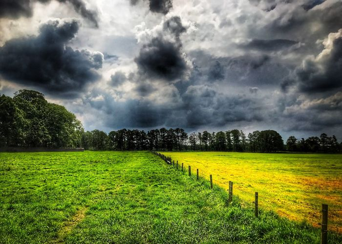 Field Tranquility Landscape Agriculture Nature Beauty In Nature Tranquil Scene Cloud - Sky Scenics No People Growth Sky Green Color Grass Tree Rural Scene Outdoors Storm Cloud Day The Great Outdoors - 2017 EyeEm Awards Ios Photography IPhoneography Iphonephotography