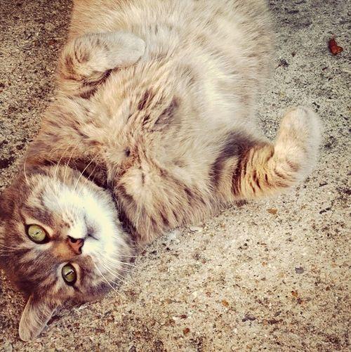 Cat Miam Cute Gne