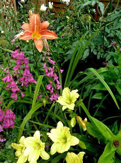 Lilies Penstemon My Garden English Garden Plants And Flowers