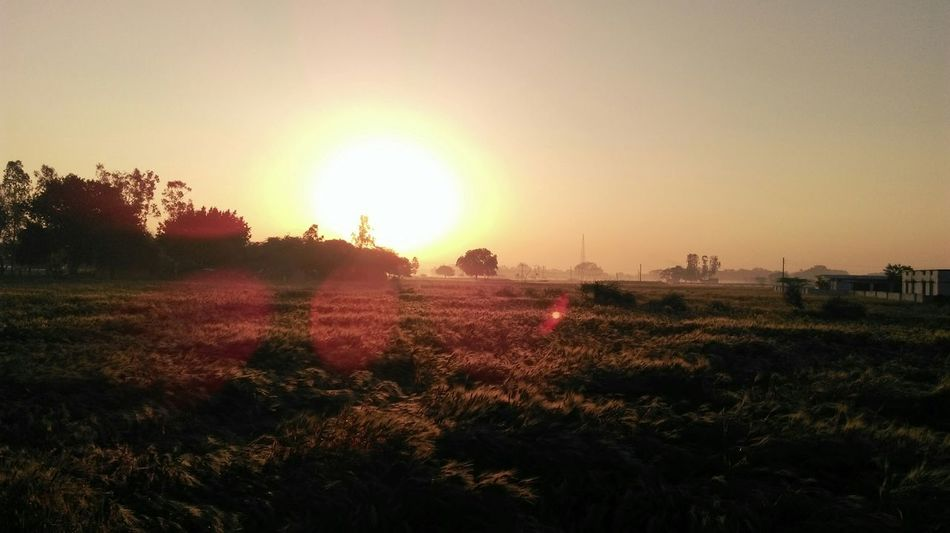 Early Morning New Shades  Sunset Crops Field Taking Photos Check This Out Hanging Out Mobile Photography Happy :)