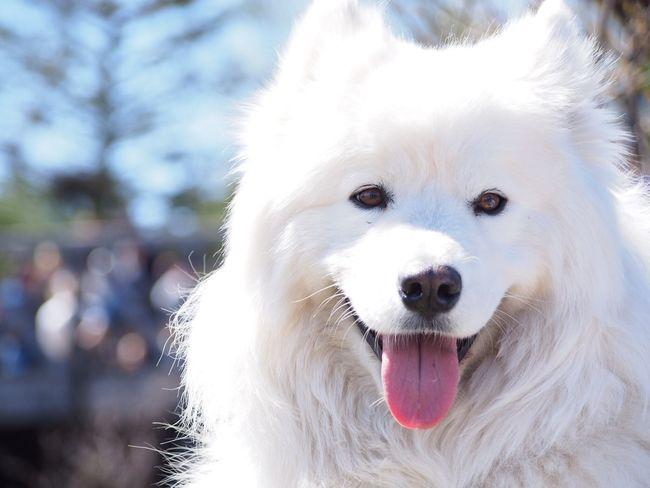 Dog Dog Love Dog Photography Cute