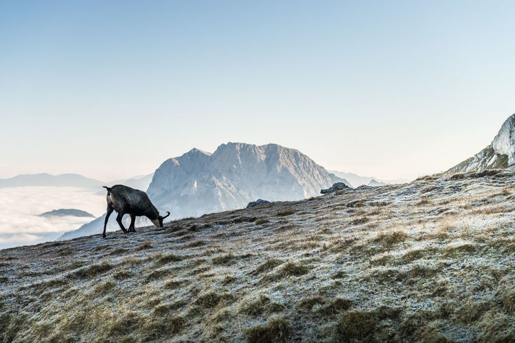 Animal Grazing On Mountain Against Sky