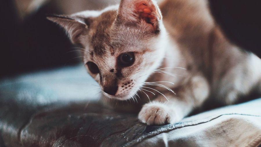 Cat Cat Pet Cute Animals Cats