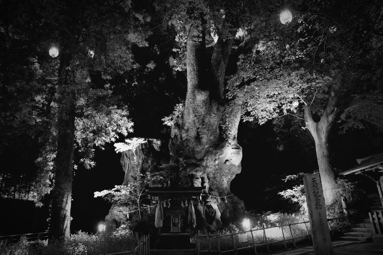 Old two thousand years or more of camphor tree EyeEmNewHere EyeEm Best Shots Blackandwhite EyeEm Best Shots - Black + White Camphor Tree Architecture Tree Night No People Built Structure Nature Illuminated