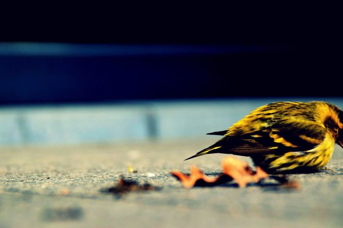 Bird Bird Photography Birds_collection Birds Of EyeEm  Edited with Picmonkey Yellow Stone Floor Outside Beautiful Nature Close Up No People Colors Exposure In The Moment Animals