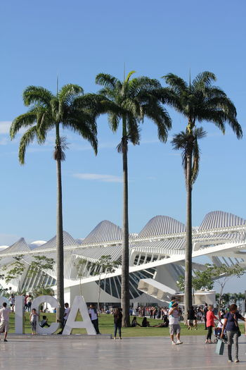 Rio De Janeiro Adult Architecture Clear Sky Coconut Palm Tree Crowd Day Group Of People Leisure Activity Lifestyles Men Nature Outdoors Palm Tree People Plant Real People Repetition Sky Travel Destinations Tree Tree Trunk Tropical Climate Trunk