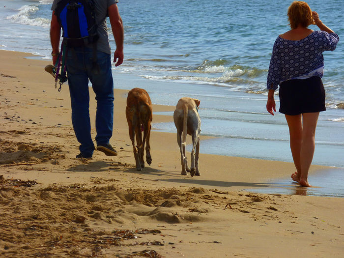 Rear view of couple walking with greyhound dogs at shore
