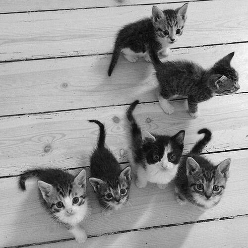 Black & White Cat♡