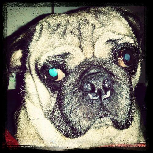 Hello World i love my Dog ♡♡♡ Dog Dogs Animels