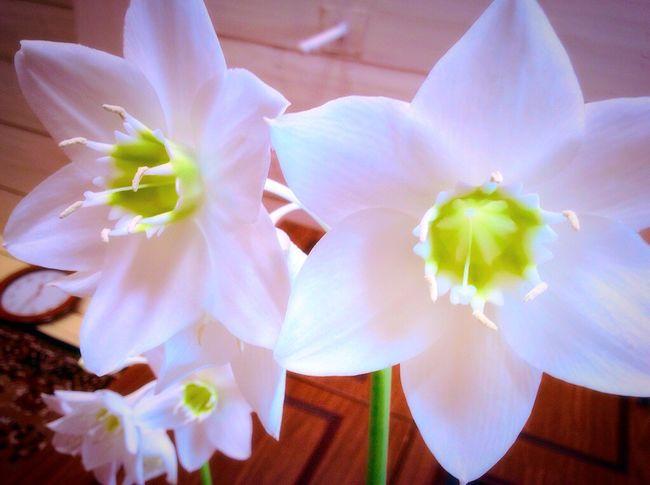 Цветы цветы красиво просто фото весна Sun Sunny Day Flower Flowers Beautiful Beaytu