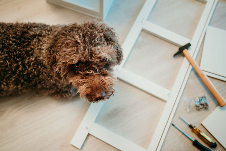 High angle view of dog on table at home