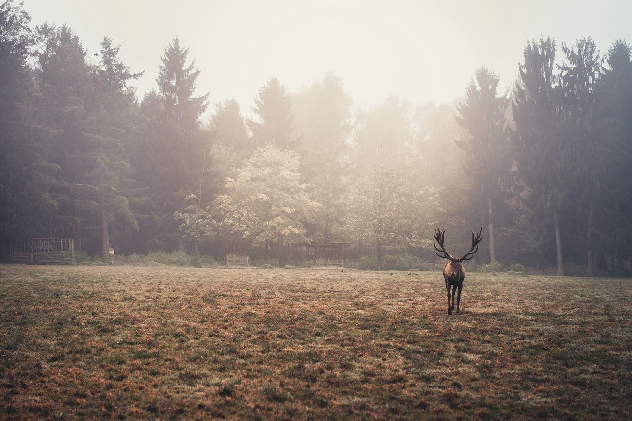 Deer on field in foggy weather