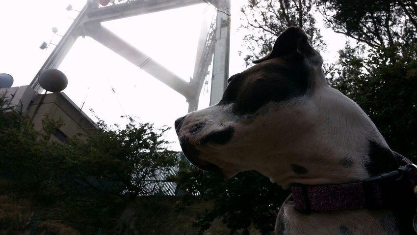 Spoon The Dog Pets Corner Sutrotower