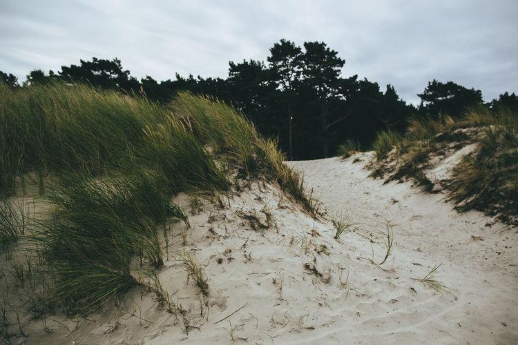 View of grassy beach